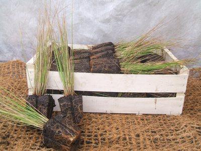 conditionnement de plantes aquatiques