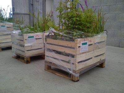 transport de plantes aquatiques