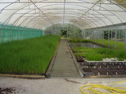culture de végétaux pour bassin