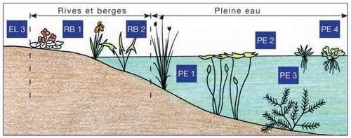 zones aquatiques bassin