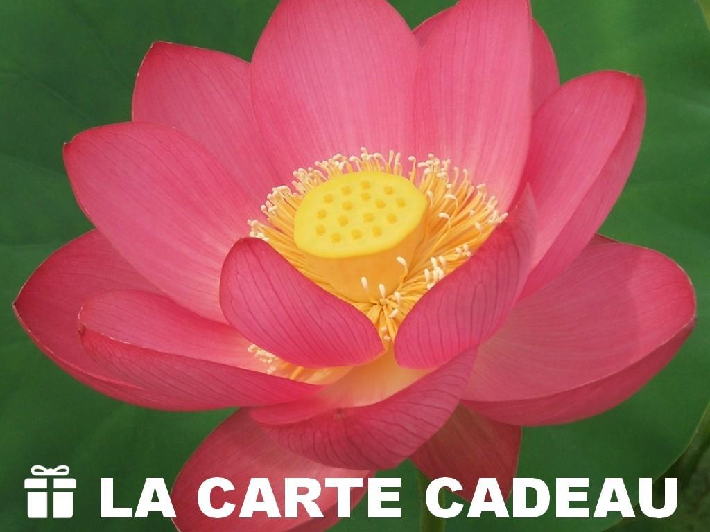 carte cadeau Lotus