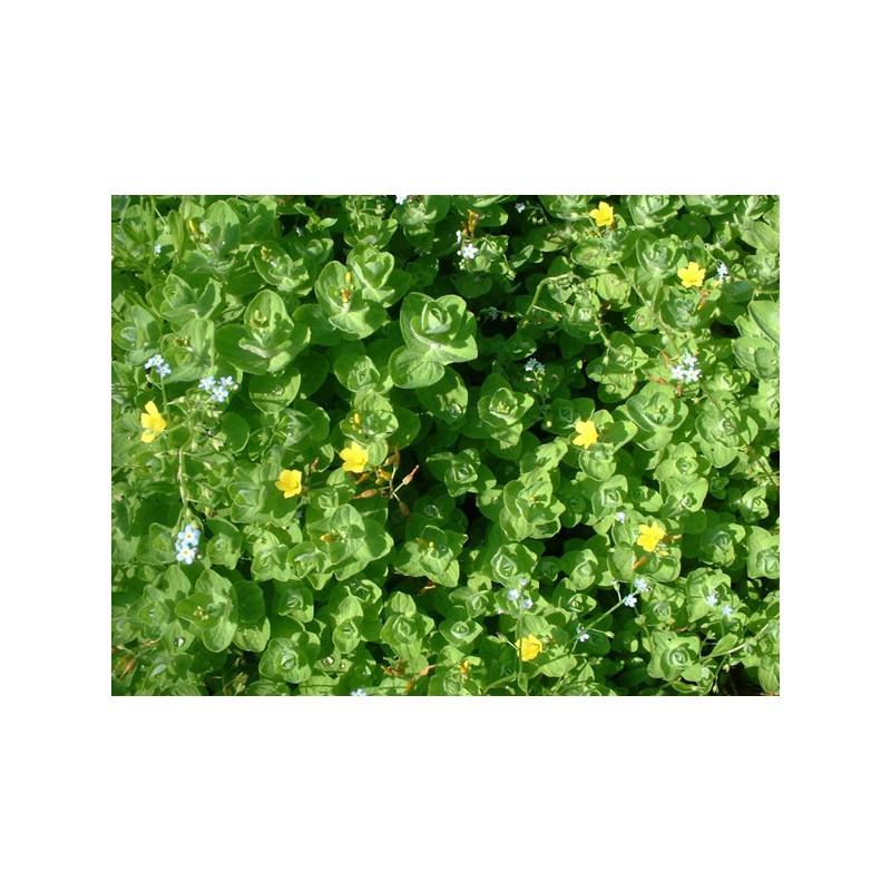 Bassin plantes oxygenantes perpignan 32 - Bassin plantes oxygenantes besancon ...