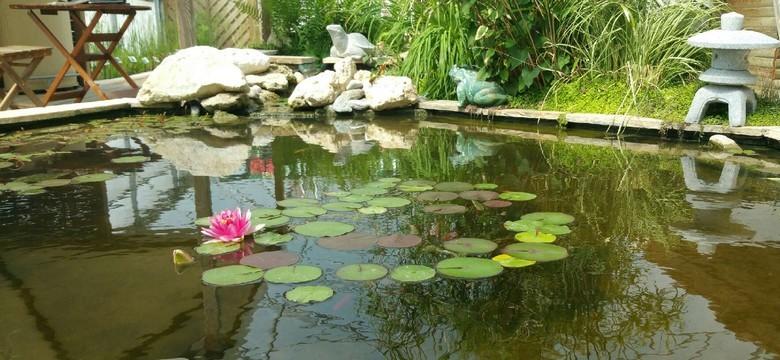 plantes aquatiques et mat riels pour bassin aquatique de la moine. Black Bedroom Furniture Sets. Home Design Ideas